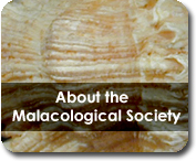 About the Malacological Society