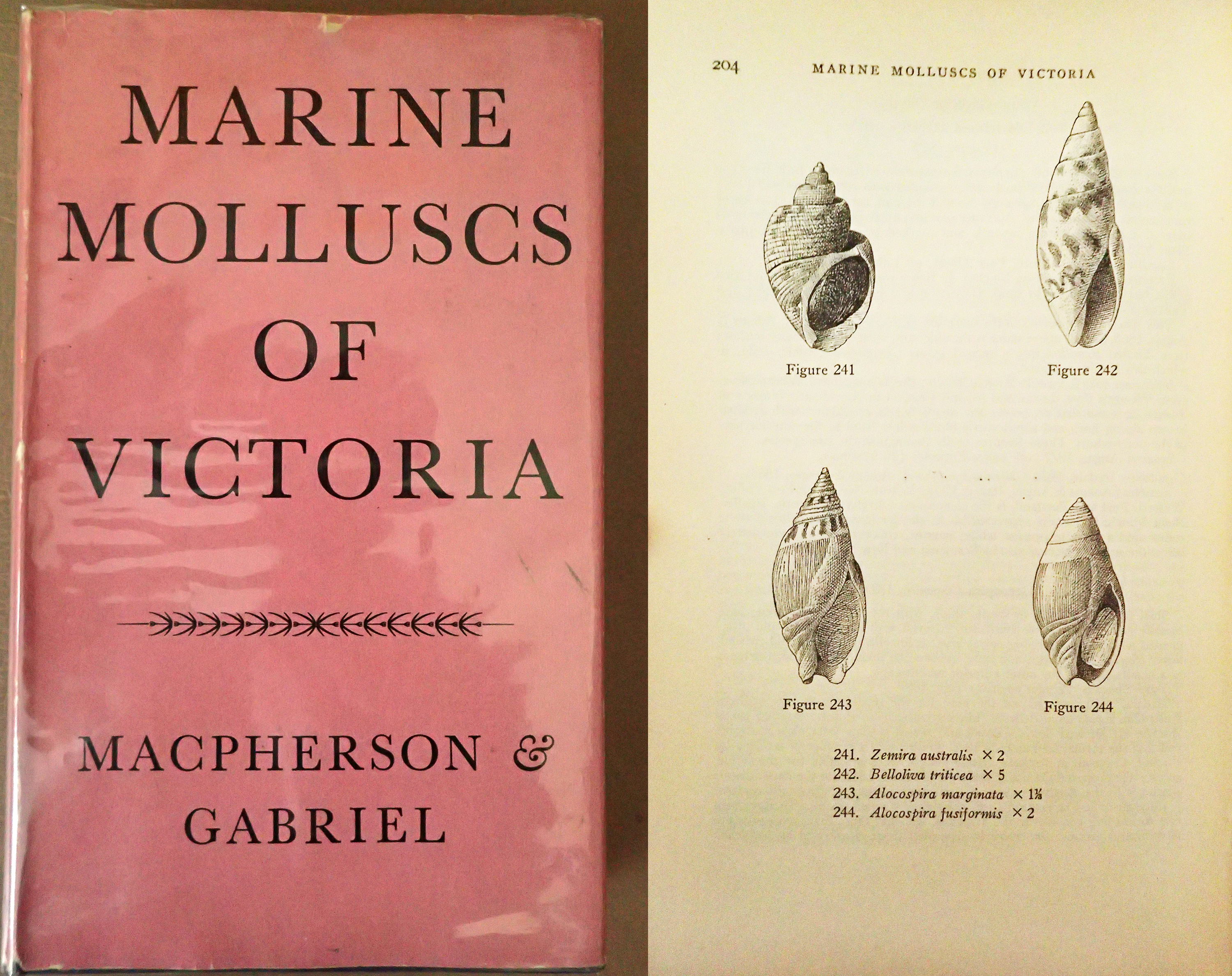 Sample photographs of the book Marine Molluscs of Victoria