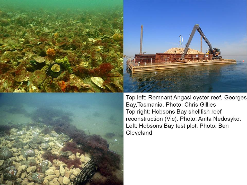 collage of oyster reefs